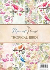 Zestaw papierów A4 Tropical Birds 40ark.