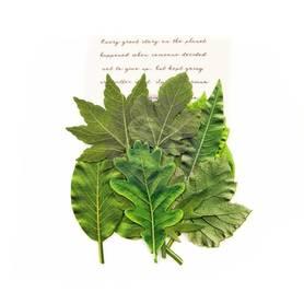 Listki Leaf Embellishments Rainer Leaves (635619)