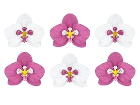 (KWDP3) Kwiatki papierowe Aloha - Orchidee