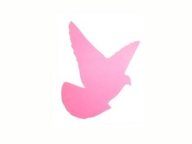 (P44) Ptak Ptaszek Gołąb